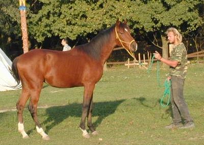 Plemenný žrebec ERGO z detskej farma Humanita. Pekný plemenársky kôň